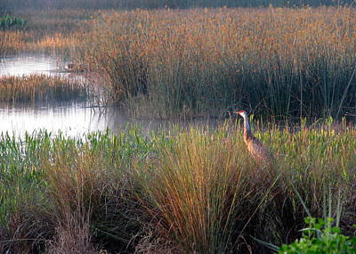Photograph - Sunrise On The Wetlands by T Guy Spencer