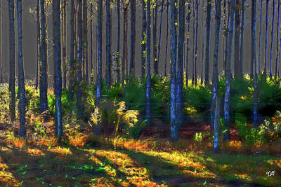 Sunrise On Tree Trunks Art Print