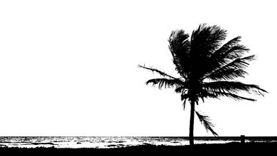 Photograph - Sunrise One Palm Cut-out Delray Beach Florida by Lawrence S Richardson Jr