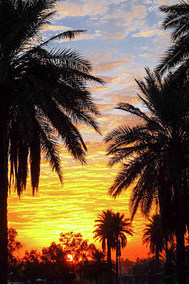 Sunrise Over Baghdad Print by Steven Green