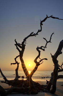 Orange Photograph - Sunrise Over Driftwood by Greg Mimbs
