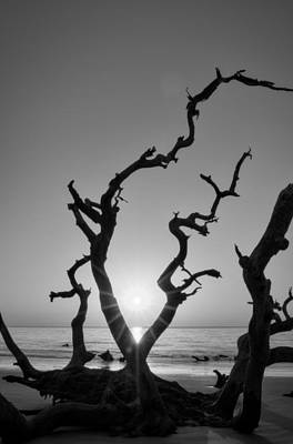 Driftwood Photograph - Sunrise Over Driftwood In Black And White by Greg Mimbs