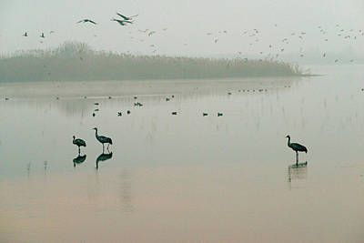 Photograph - Sunrise Over The Hula Valley Israel 2 by Dubi Roman
