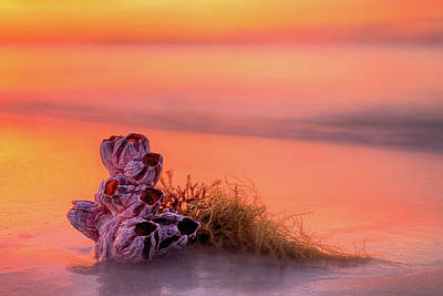 Sunrise Over The Waves Of South Walton Art Print by JC Findley