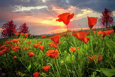 Photograph - Sunrise Poppies by Debra and Dave Vanderlaan