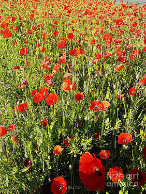 Photograph - Sunrise Poppies by Felicia Tica