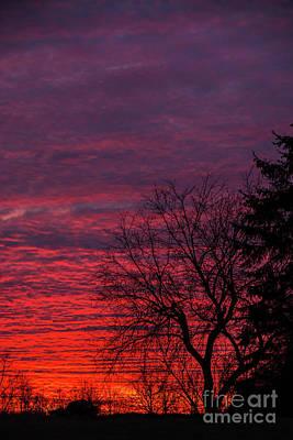 Photograph - Sunrise Portrait by Cheryl Baxter