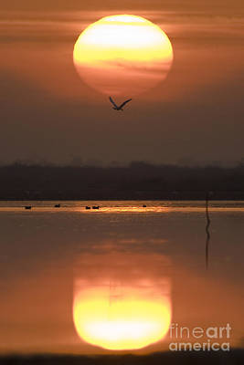 Sunrise Reflection Art Print by Hitendra SINKAR