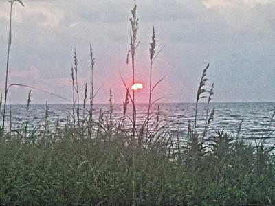 Grateful Dead - Sunrise Sea Oats 2 by Rene Barger