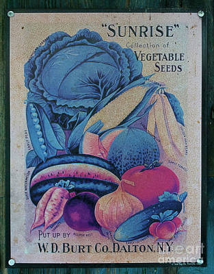 Photograph - Sunrise Seeds by Skip Willits