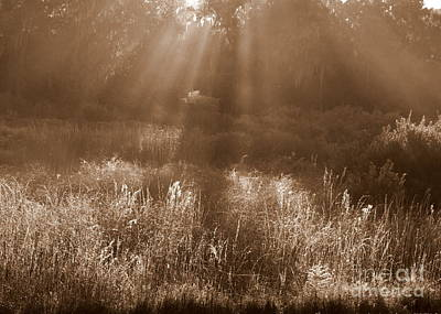 Sunrise Sepia Art Print