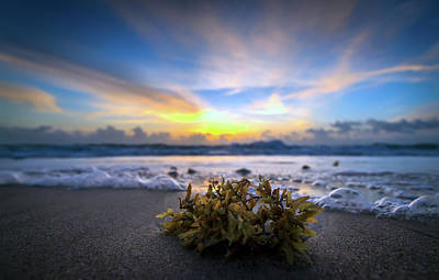 Photograph - Sunrise Shoreline by R Scott Duncan