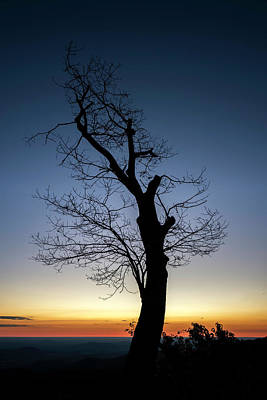Photograph - Sunrise Silhouette  by Ryan Wyckoff
