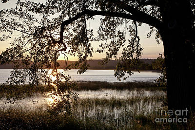 Art Print featuring the photograph Sunrise Silhouette by Susan Cole Kelly
