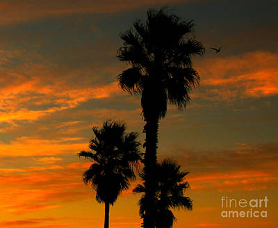 Photograph - Sunrise Silhouettes by Janice Westerberg