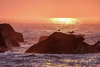 Photograph - Sunrise, South Shore by Tom Cameron