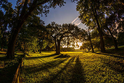 Photograph - Sunrise Spanish Moss Shadows by Chris Bordeleau
