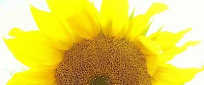 Sunflower Sunrise Art Print
