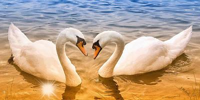 Digital Art - Sunrise Swans by Jeanette Mahoney