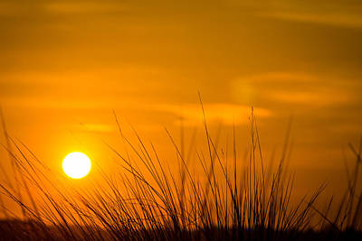 Photograph - Sunrise Through Frederica Marsh Reeds by Chris Bordeleau