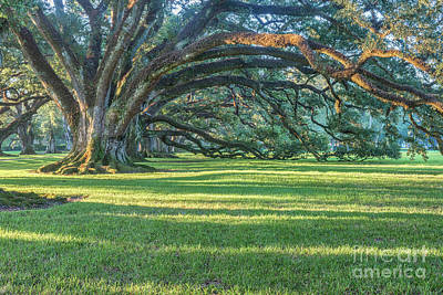 Plantations Photograph - Sunrise Through The Oaks  by Tod and Cynthia Grubbs
