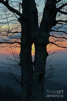 Photograph - Sunrise Through The Tree - Blue Ridge Parkway  by Kerri Farley