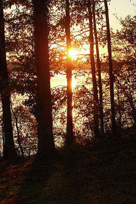Photograph - Sunrise Through The Trees by Art Block Collections
