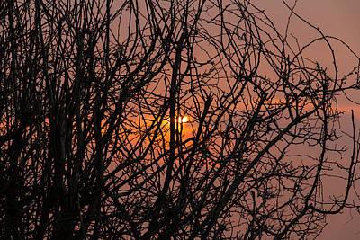 Photograph - Sunrise Through The Trees  by David Warrington