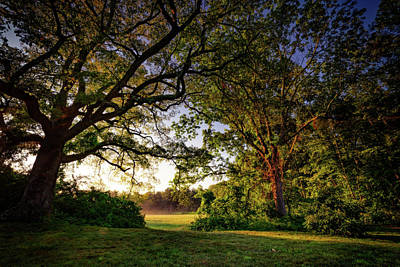 Photograph - Sunrise Through The Trees by Rick Berk