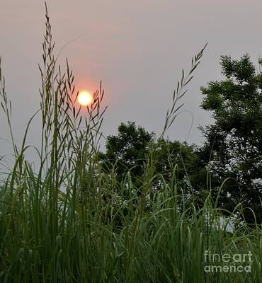 Photograph - Sunrise Thru The Grass by Mark McReynolds