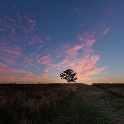 Sunrise Photograph - Sunrise Tree 2016 Square by Bill Wakeley
