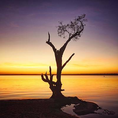 Photograph - Sunrise Tree Silhouette At Boreen Point by Keiran Lusk