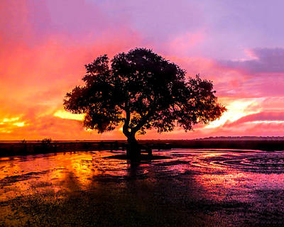 Photograph - Sunrise Tree by Terry Shoemaker