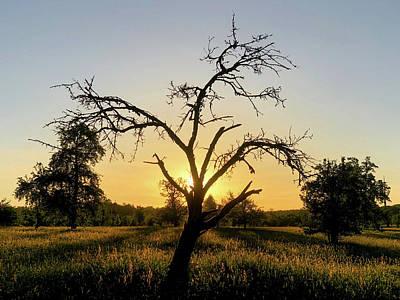 Photograph - Sunrise Tree Warm Orange Light by Matthias Hauser