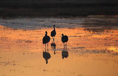 Photograph - Sunrise Trio by Jean Clark