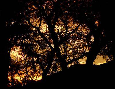 Photograph - Sunrise Weave by Mark Blauhoefer