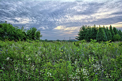 Photograph - Sunrise Wildflowers by Bonfire Photography