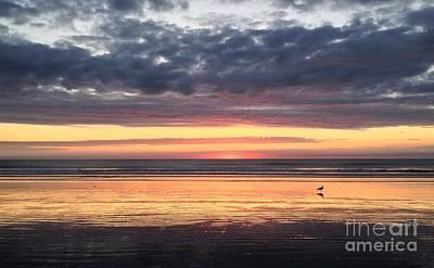 Sunrise With Gull Art Print