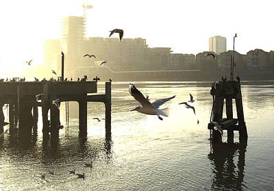 Sunrise With Seagulls Art Print