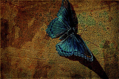 Photograph - Suns Cast Butterfly Art by Lesa Fine