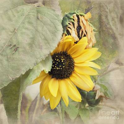 Last Sunflower Art Print