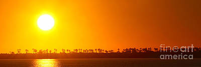 Photograph - Sunset Along Line Of Palms by Max Allen