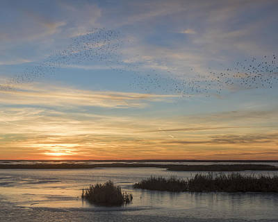 Photograph - Sunset And Blackbirds by Rob Graham