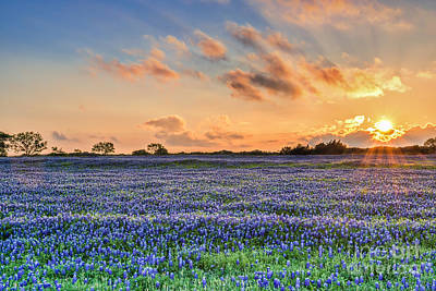 Rural Landscapes Photograph - Sunset And Bluebonnets by Tod and Cynthia Grubbs