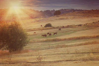 Photograph - Sunset And Horses by Amanda Smith