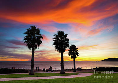 Photograph - Sunset And Palms by Mimi Ditchie