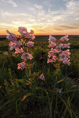 Sunset And Penstemon Art Print