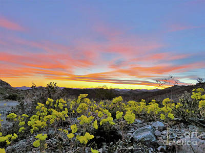 Photograph - Sunset And Primrose by Michele Penner