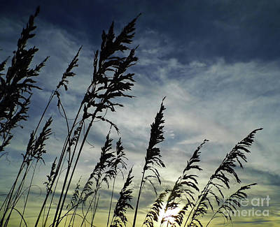 Nature Photograph - Sunset And Sea Oats by D Hackett