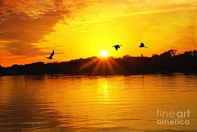 Ocean Sunset Wall Art - Photograph - Sunset And Shorebirds by Laura D Young